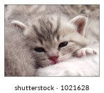 Stock photo grey cat s with green eyes 1021628