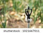 sprinkler water for vegetables... | Shutterstock . vector #1021667011