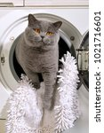 Stock photo cat looks out of a washing machine 1021716601