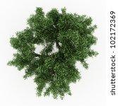 3d sessile oak  tree isolated...   Shutterstock . vector #102172369