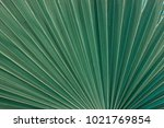 green tropical palm leaf...   Shutterstock . vector #1021769854