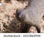 a closeup front view portrait... | Shutterstock . vector #1021863934