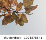 gold leaf is awesome background. | Shutterstock . vector #1021878541