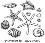 selection of sea shells drawings | Shutterstock .eps vector #102189397