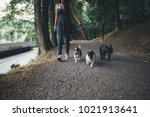 Stock photo dog walker with dogs enjoying in park 1021913641