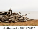 piles of driftwood on the... | Shutterstock . vector #1021929817