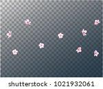 pink cherry blossom confetti... | Shutterstock .eps vector #1021932061