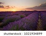 sunset over the valley near... | Shutterstock . vector #1021934899