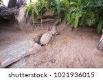 turtles lay eggs | Shutterstock . vector #1021936015