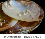 pearls of the persian gulf | Shutterstock . vector #1021947679
