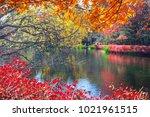 the beautiful maple season at... | Shutterstock . vector #1021961515