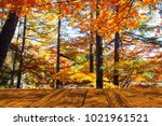 the beautiful maple season at... | Shutterstock . vector #1021961521