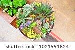 tray garden for winter season | Shutterstock . vector #1021991824
