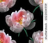realistic peony flower on a... | Shutterstock .eps vector #1022034559