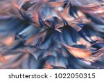 bird chickens feather texture... | Shutterstock . vector #1022050315