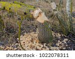 beaver gnawed and piled wood ... | Shutterstock . vector #1022078311
