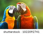 Colorful Scarlet Macaw Parrots