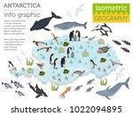 isometric 3d antarctica flora... | Shutterstock .eps vector #1022094895