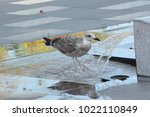 The Gray Sea Seagull In Hot Da...