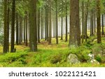 natural foggy spruce tree forest | Shutterstock . vector #1022121421