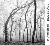 winter forest of crooked beech... | Shutterstock . vector #1022121439