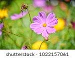 flower  wallpaper  garden ...   Shutterstock . vector #1022157061