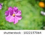 flower  wallpaper  garden ...   Shutterstock . vector #1022157064