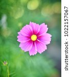 flower  wallpaper  garden ...   Shutterstock . vector #1022157067