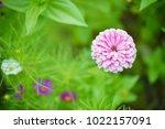 flower  wallpaper  garden ...   Shutterstock . vector #1022157091
