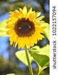 flower  wallpaper  garden ...   Shutterstock . vector #1022157094