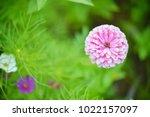 flower  wallpaper  garden ...   Shutterstock . vector #1022157097