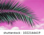 saturated pink sky with palm... | Shutterstock . vector #1022166619
