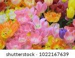 nature background of vibrant...   Shutterstock . vector #1022167639