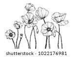 vector line art with poppies.... | Shutterstock .eps vector #1022176981