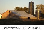 Small photo of Cow barn sunset