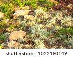 a plot of summer landscaped... | Shutterstock . vector #1022180149