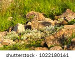 a plot of summer landscaped... | Shutterstock . vector #1022180161