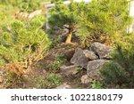 a plot of summer landscaped... | Shutterstock . vector #1022180179