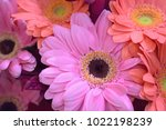 macro texture of vibrant...   Shutterstock . vector #1022198239