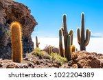 Big Cactus On Incahuasi Island...