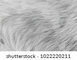 close up white dog hair texture ... | Shutterstock . vector #1022220211