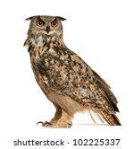 Stock photo eurasian eagle owl bubo bubo a species of eagle owl standing in front of white background 102225337