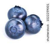 blueberries isolated on white...   Shutterstock . vector #1022259001