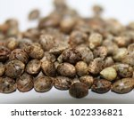 cannabis seeds close up macro... | Shutterstock . vector #1022336821