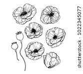 poppies flowers hand drawn set. ...   Shutterstock .eps vector #1022345077