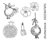 hand drawn pomegranate.  vector ... | Shutterstock .eps vector #1022367691