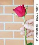 valentine s day .female's hand... | Shutterstock . vector #1022370847