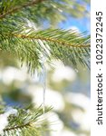snow covered pine branch with... | Shutterstock . vector #1022372245