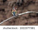 little exotic bird with...   Shutterstock . vector #1022377381