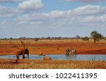 elephants and zebras at the... | Shutterstock . vector #1022411395